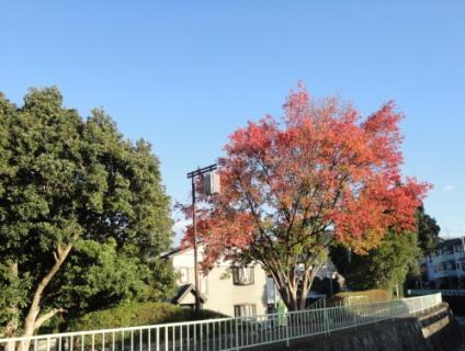 疏水沿いの紅葉