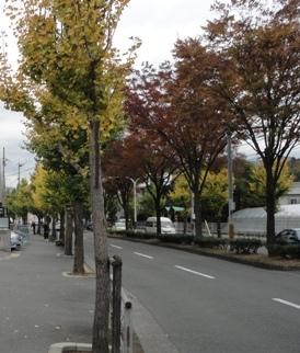 白川通りの並木