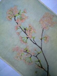 桂仙のブログ-120411_1724~0001.jpg