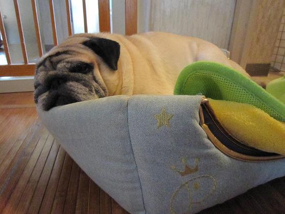 問題、チッチはどこで寝ているんでしょう~