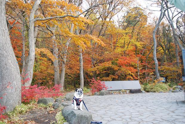 紅葉とチッチ、乙女の像周辺