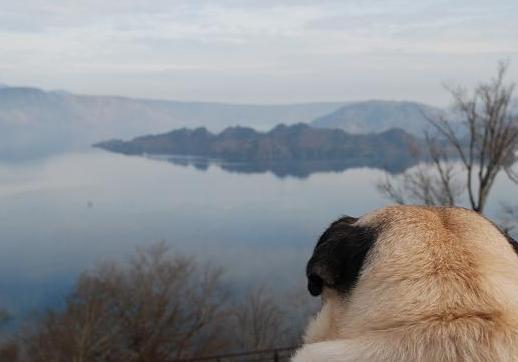 発芽峠から、チッチ十和田湖を見るの図