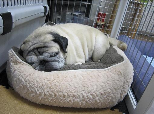保護色ベッドを出したよ。