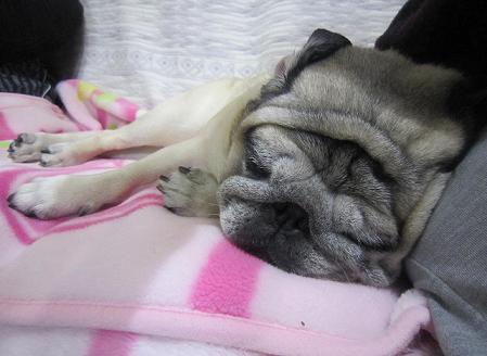 最近寝ているチッチばかりだね。