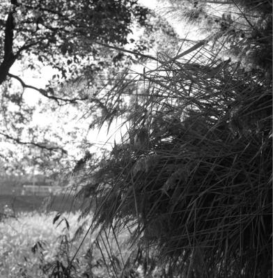 20101212Hakushima_Motomachi_Rolleiflex_2.jpg