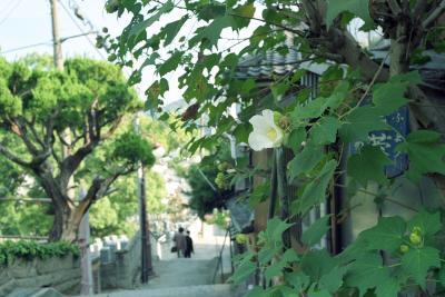 20111104_Onomichi_Summicron35F35_Gold100_6.jpg