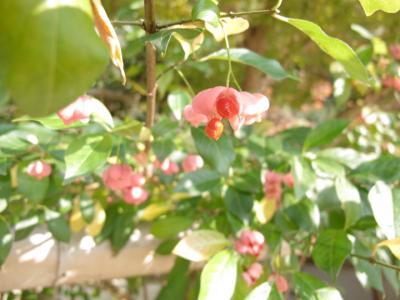 2011_11_14_Fudoin0013.jpg