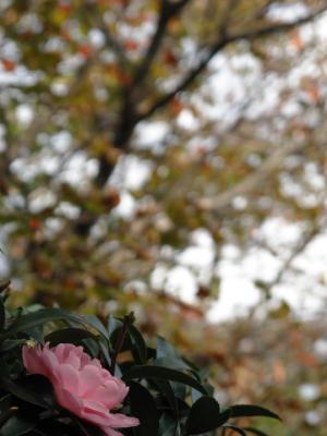 2011_11_14_Fudoin0016.jpg