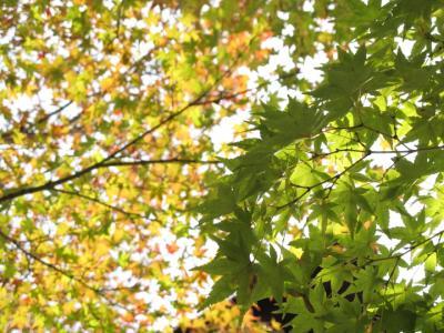 2011_11_14_Fudoin0017.jpg