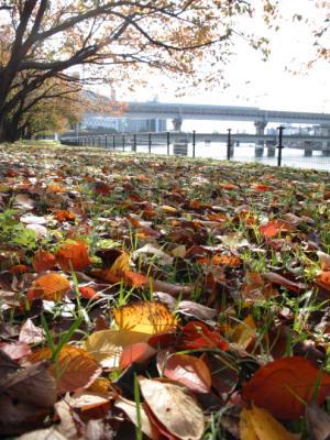 2011_11_20_Motomachi0001.jpg
