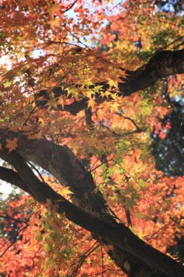 2011_11_23_KikkoPark0003.jpg