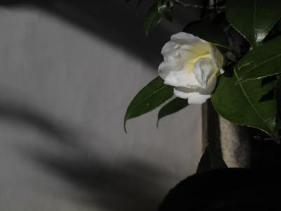 2011_11_26_Enkoji0006.jpg