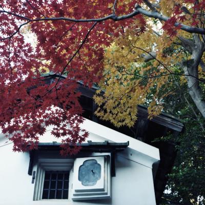 2011_11_26_Rolleiflex_Shisendo_1.jpg