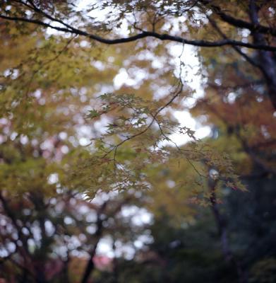 2011_11_26_Rolleiflex_Shisendo_4.jpg