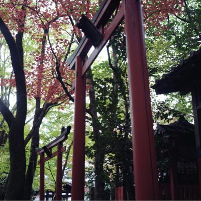 2011_11_27_Rolleiflex_ImakumanoCanonji_11.jpg