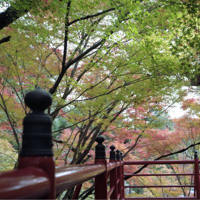 2011_11_27_Rolleiflex_ImakumanoCanonji_17.jpg