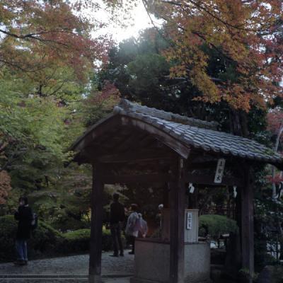 2011_11_27_Rolleiflex_ImakumanoCanonji_20.jpg
