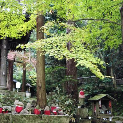 2011_11_27_Rolleiflex_ImakumanoCanonji_22.jpg