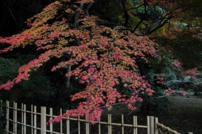 2011_12_04_Fudoin0005.jpg
