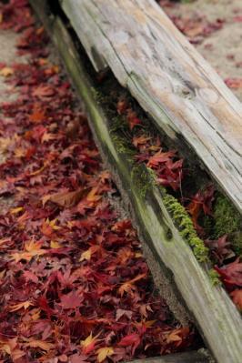 2011_12_04_Fudoin0007.jpg