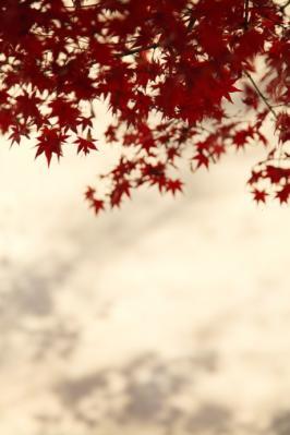 2011_12_04_Fudoin0010.jpg