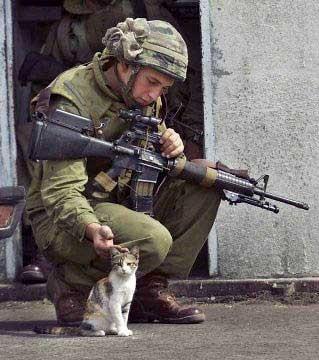 army_cat.jpg