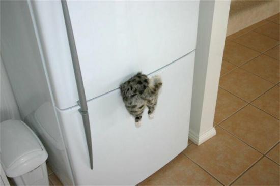 fridgecat.jpg