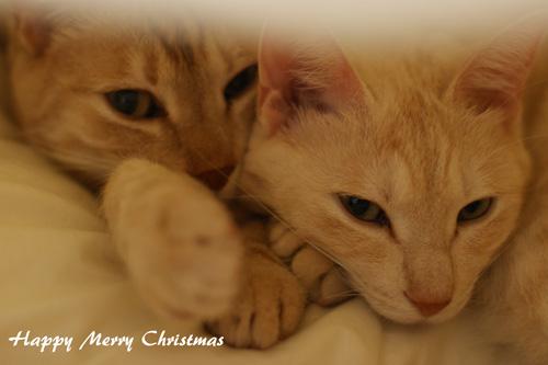 ぶーなクリスマス