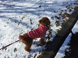 2014.12月初積雪