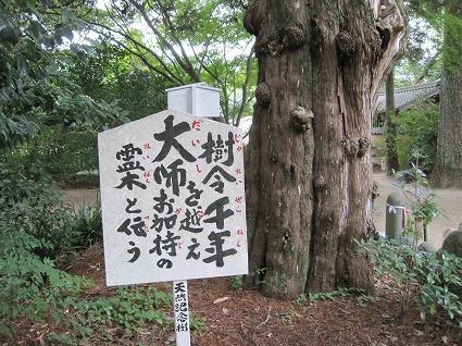 浄瑠璃寺05