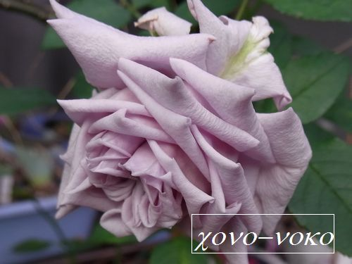 syatomiltiyu7s_20111122185845.jpg