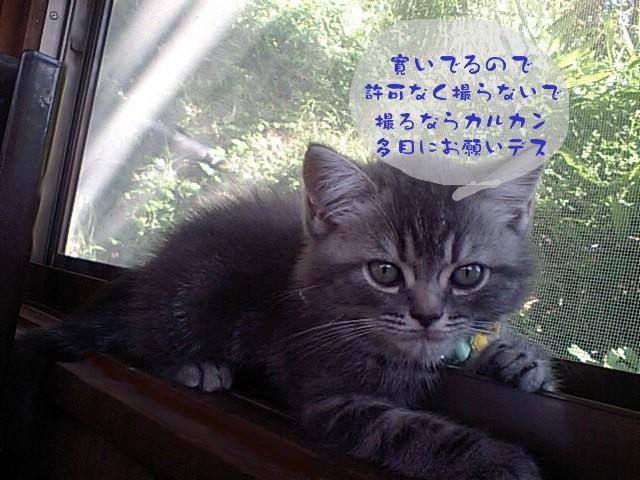 20100810blog2
