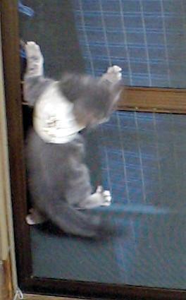 20100822ha-nesu3