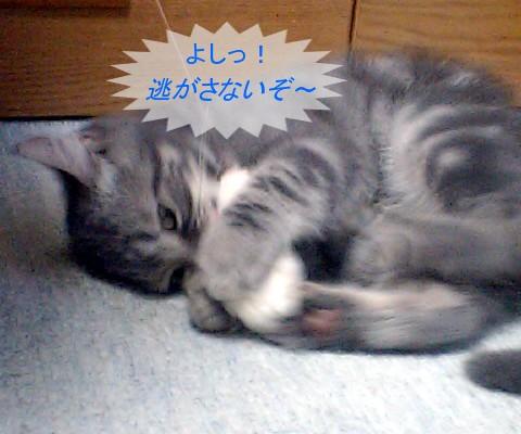 20100906blogturi1