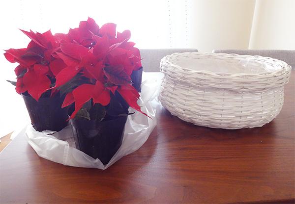 ポインセチア飾り方クリスマス