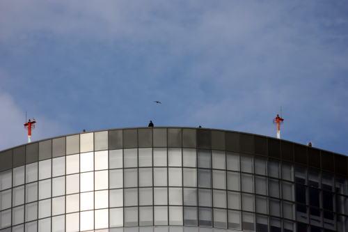 放鷹 電通ビルの屋上から