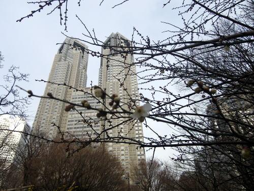 中央公園の銀世界蕾
