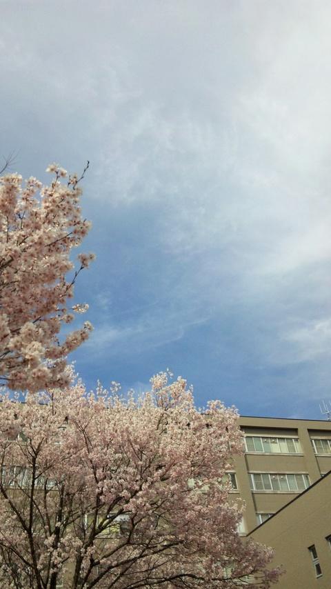 桜と春の空2
