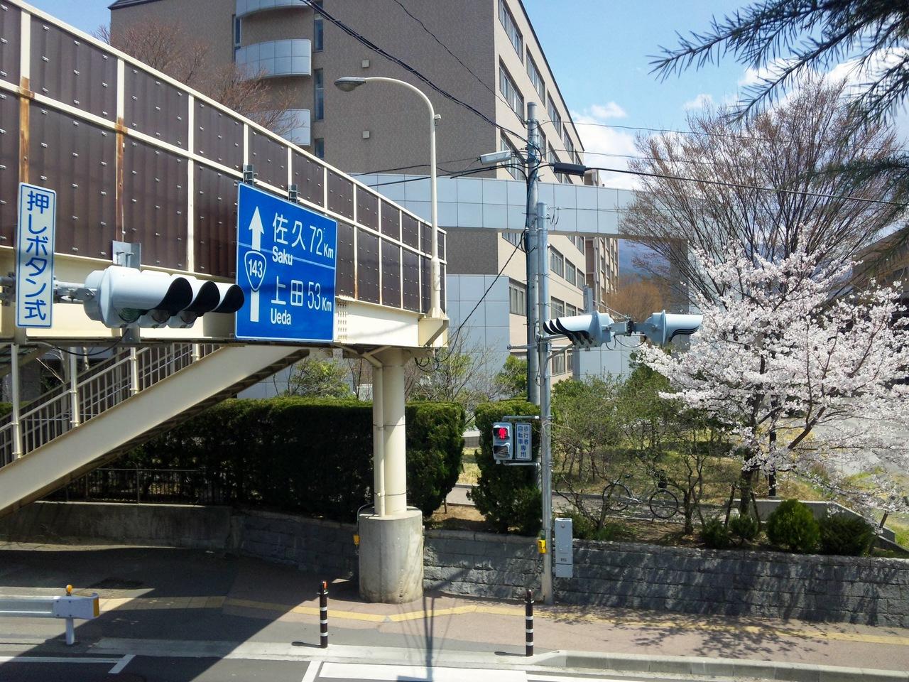 歩道橋と桜