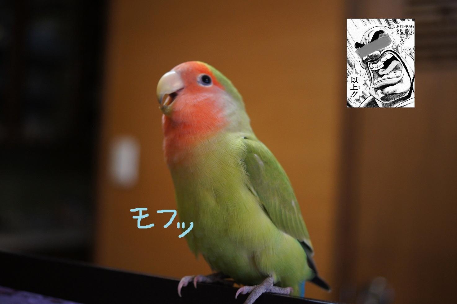 マリモ塾長