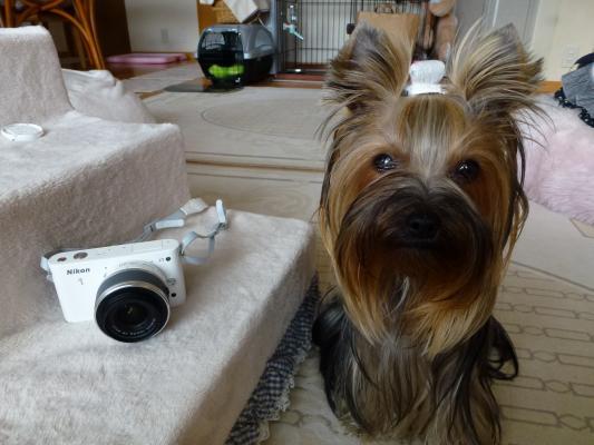 カメラです