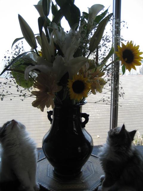 花と猫 073