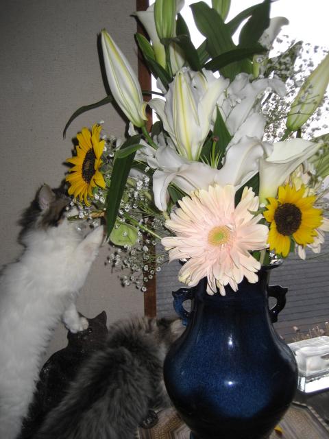 花と猫 092