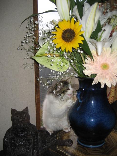 花と猫 090