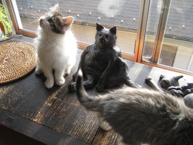 猫neko 062