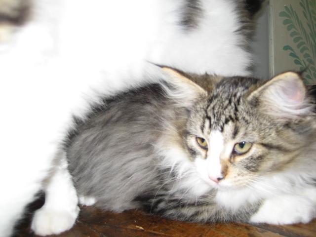 猫目線 021