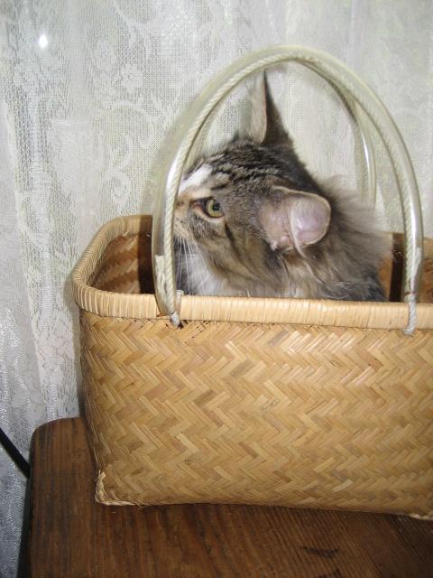 銀座猫展画像 004