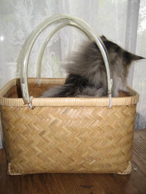 銀座猫展画像 003