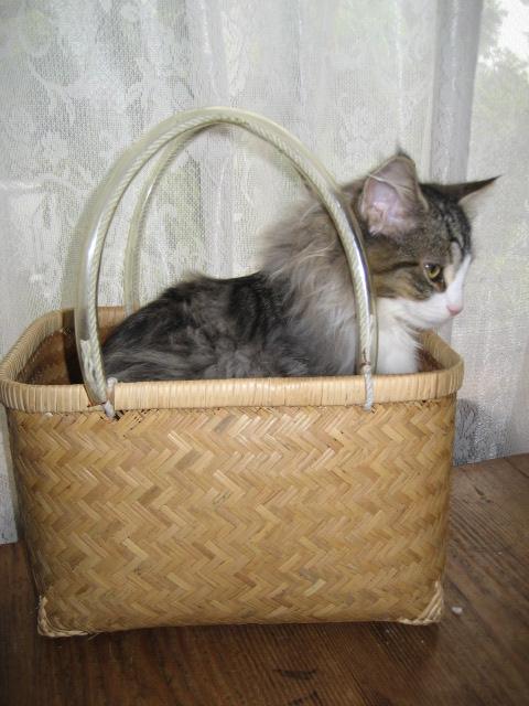 銀座猫展画像 007