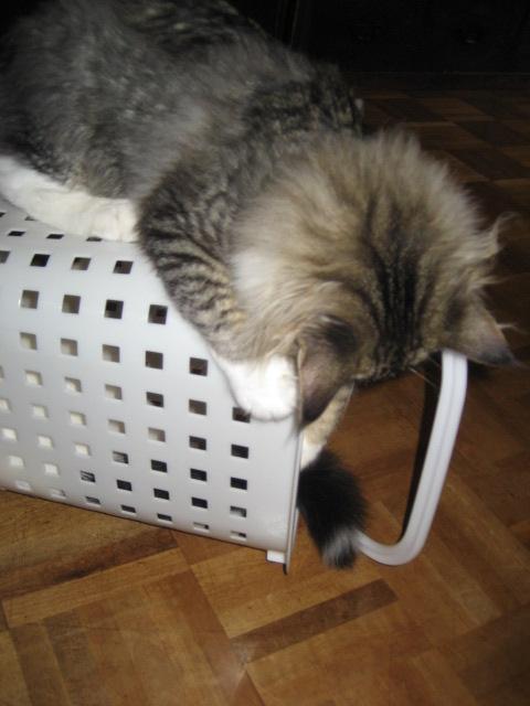洗濯カゴ 001